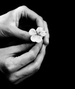 Gently handled flower